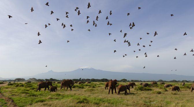 2020年ケニア・ルワンダ旅 9日目(2020/2/25)