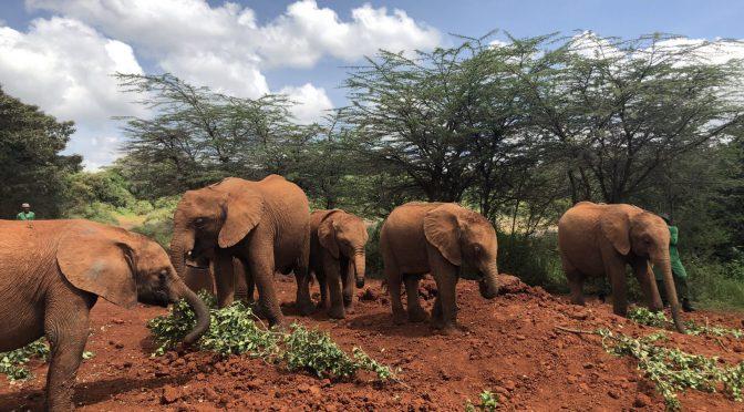 2020年ケニア・ルワンダ旅 8日目(2020/2/24)
